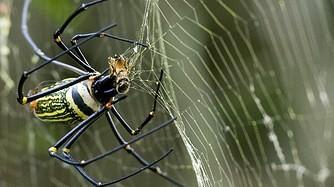 Spider/BIKING 2days/1night SAIGON to NAM CAT TIEN NATIONAL PARK