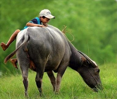 kid and water buffalo/BIKING 17 days/16nights - SAIGON to HA NOI